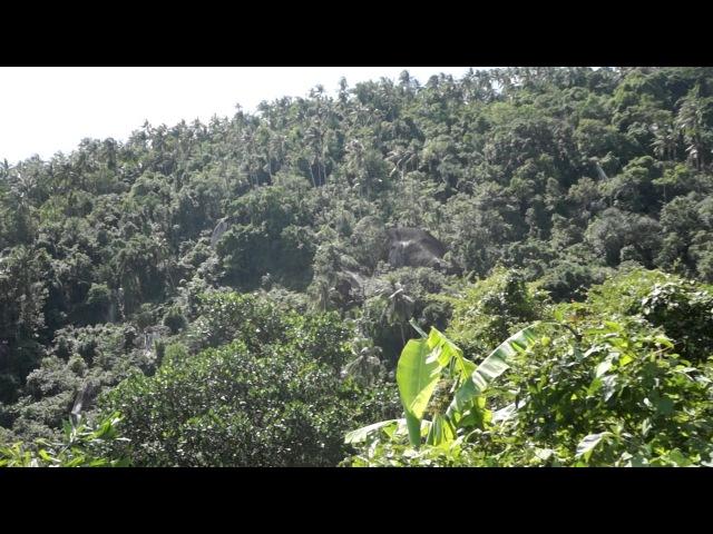 Сейчас рванем в джунгли Самуи Таиланд