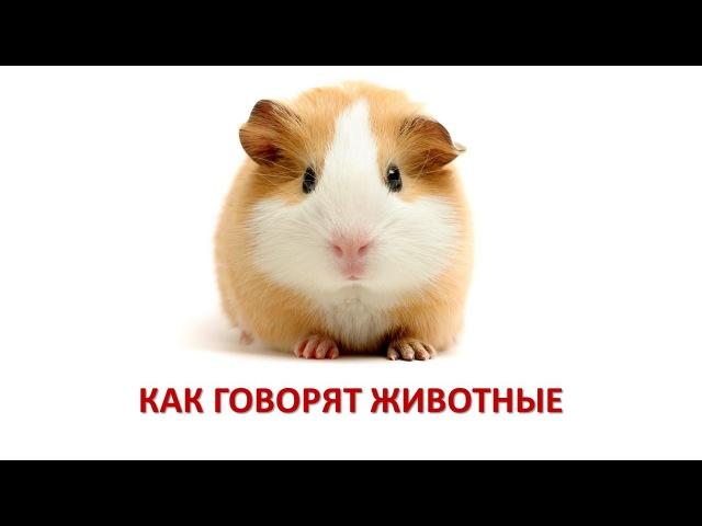 Как говорят животные. Энциклопедия для детей