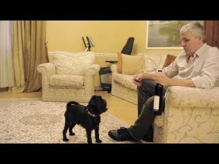 Бельгийский гриффон. Самая умная собака. Брюссельский гриффон. Гарри Шторм 2