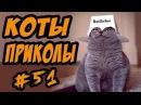 Приколы с котами ДО СЛЁЗ 2017 Смешные Коты Видео с кошками