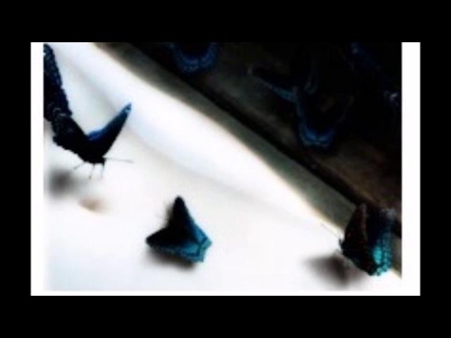 Eve Mazaki - POST MORTEM
