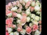51 кустовая бело-кремовая роза