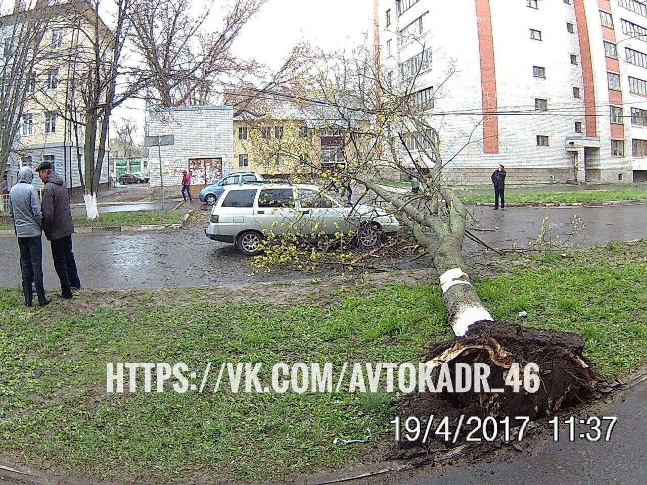 На улице Черняховского упавшее дерево перекрыло дорогу