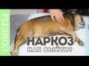 Как выходить из наркоза? Советы ветеринара.