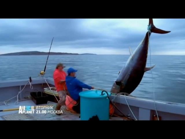 Animal Planet - Крупный улов