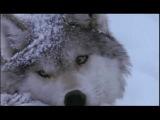 Алексей Стёпин (Alexey Stepin) - Волчья песня