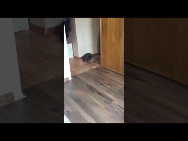 07.07.2017 - котик Даллас обрел свой дом (видео из дома)
