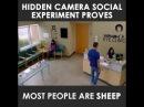Подчинение толпе. Социальный эксперимент, снятый скрытой камерой