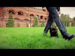 Брюссельский гриффон. Топ самых умных собак. Бельгийский гриффон. Гарри Шторм -3