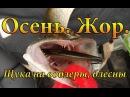 Осень Жор щуки Рыбалка на щуку Ловля щуки на спиннинг Блесны Воблеры Балисонг Орбит рулят