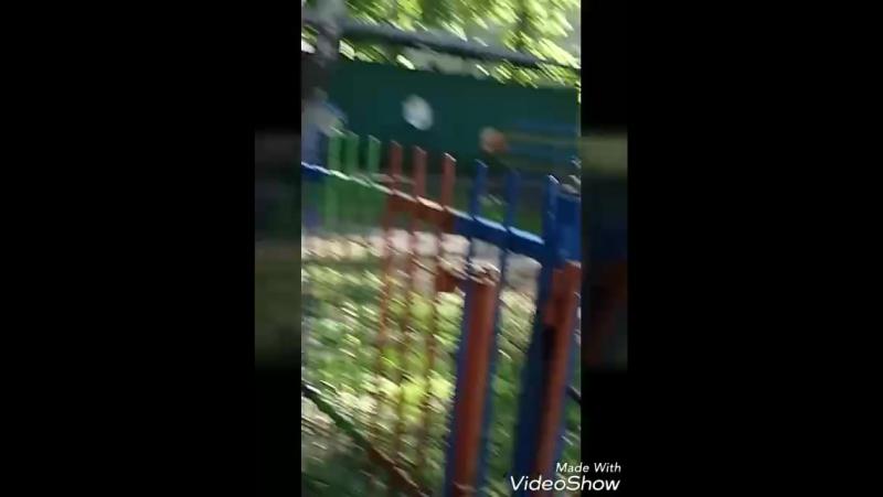приключения ОСА 1 сезон 2 серия