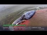 Жалко кита