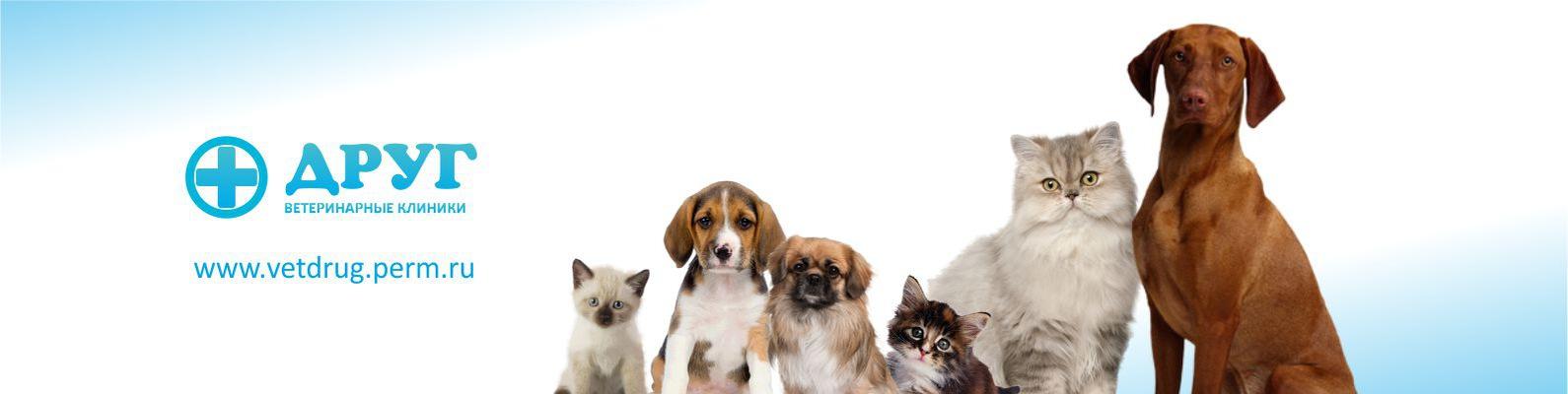 Разместить объявление по ветеринаринарным клиникам авито краснодарский край частные объявления мебель