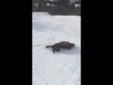 Собака-спасатель умеет отдохнуть на склоне