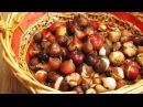 Храним луковицы тюльпанов после выкопки правильно