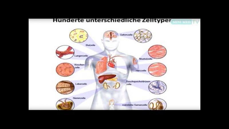 Das Blut - Leukämie und Lymphome - MINI MED Studium mit Ass.-Prof. Priv.-Doz. Dr. Stefan Wöhrer