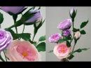 Hướng dẫn làm hoa hồng Juliet - David Austin