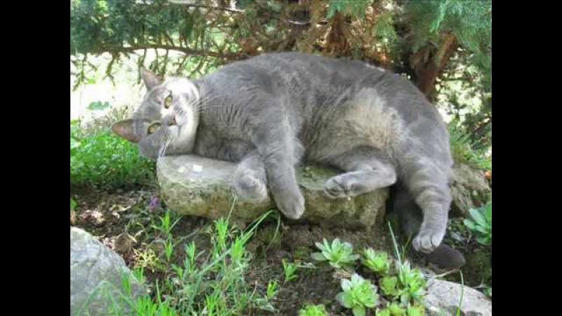 Необычные украшения для сада. Коты на даче