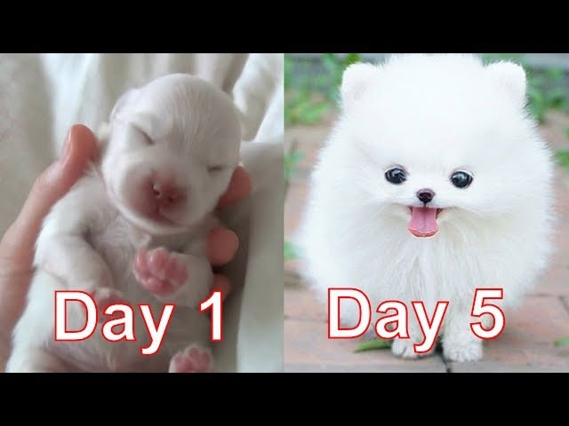 My Puppy grows so fast!! **MUST WATCH!**