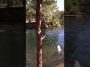 В Челябинске в карьере парка Гагарина купаются собаки, дети и бомжи