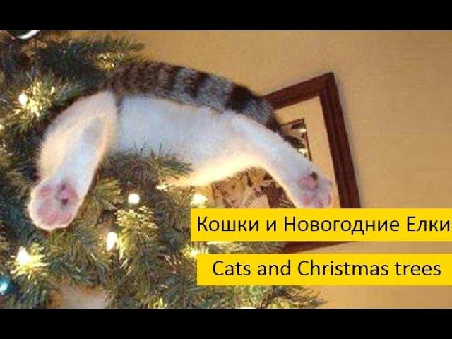 Кошки и Новогодние Елки. Смешные кошки против елок