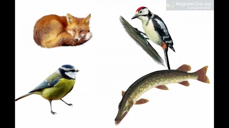Урок 45 Природознавство 1 клас. Які дикі тварини живуть у твоєму краї