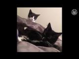 Подборка предельно наглых кошек