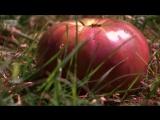 Музейные тайны (4 сезон 9 серия) Катастрофа в Ист-Ривер и мясной дождь