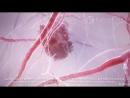 Клетки рака в 3D