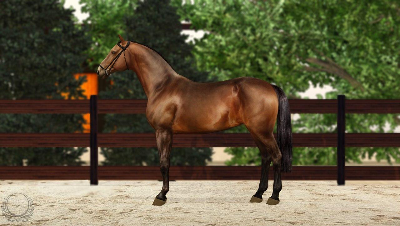Регистрация лошадей в RHF 2 - Страница 8 RmSulgC1ZCM