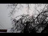 Красавцы-снегири на проспекте Автозаводцев обедают ранетками. 24.01