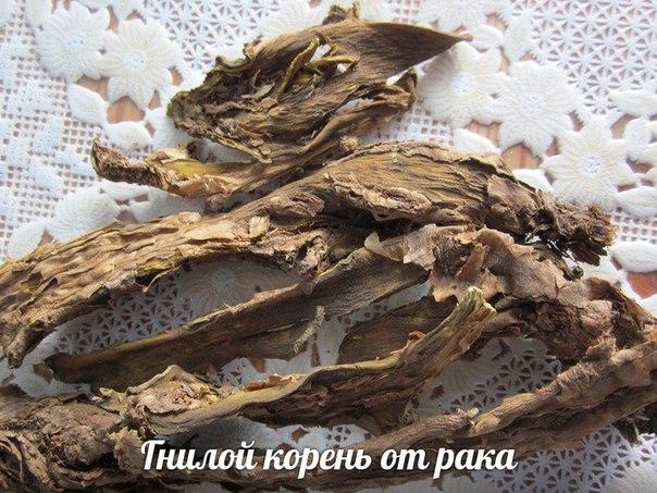 Гнилой корень 50 гр