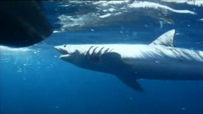 Серия 01. 10 самых опасных акул / Ten Deadliest Sharks (2001)