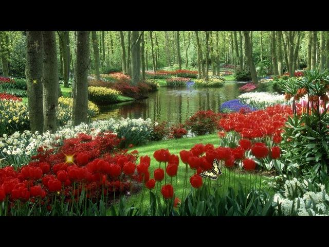 Цветущий сад из царства вечной красоты