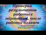 Проверка результатов работы с мёртвыми, после работы волхвов - Антон Поддубный