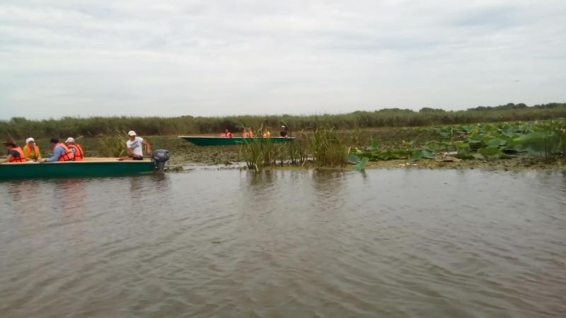 Цветение лотосов в дельте Волги 2