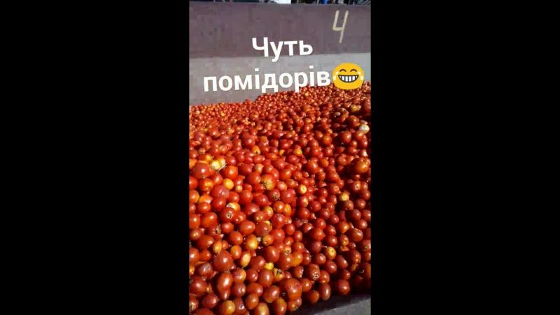 пан помідор 😄