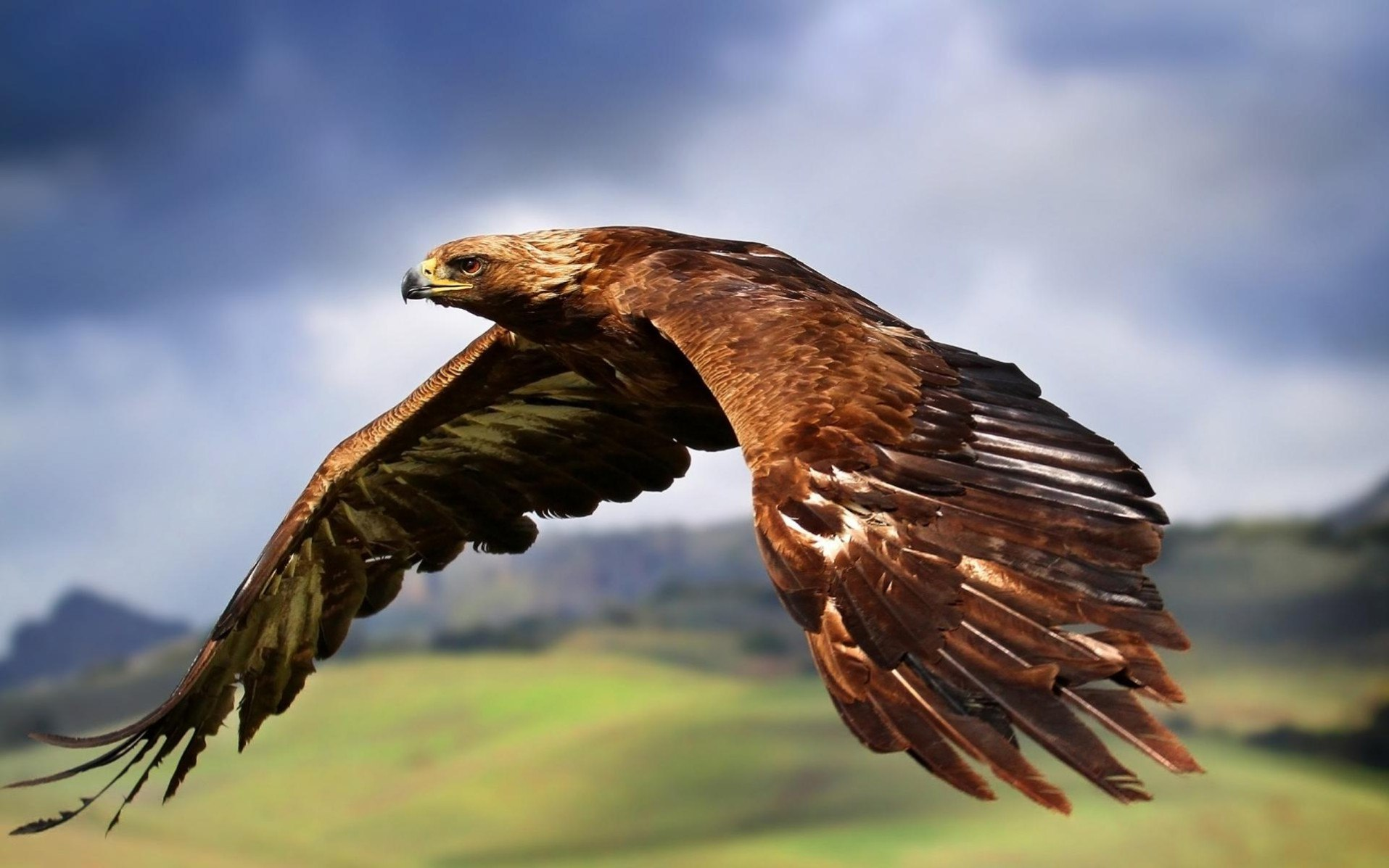 sRbI2VAykfk - Настоящий Кавказский тост про орла
