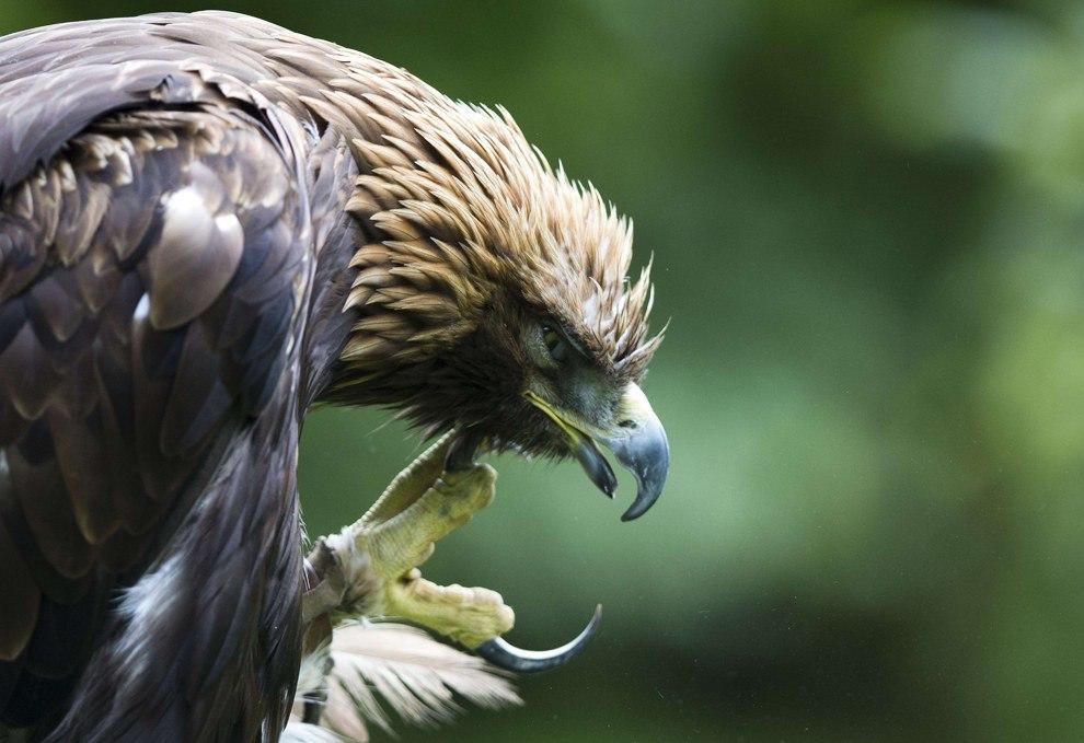 9OoxPVkthq0 - Настоящий Кавказский тост про орла
