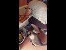 нагуляла блох с подвальным котом