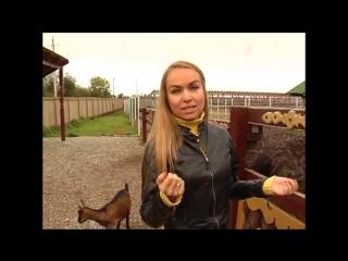 Приключения Миши и Маши на страусиной ферме
