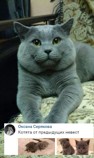 [id125571852|Оксана] , вам нормально сутенершей то кошачьей подрабатыв