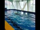 Наш первый открытый урок по плаванию 🤗🤗🤗🤗
