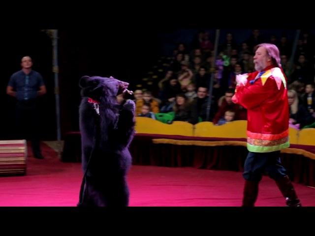 Шоу с медведем - 8(916)702-11-08