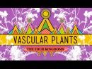 Vascular Plants = Winning! - Crash Course Biology 37