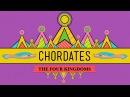Chordates - CrashCourse Biology 24