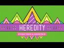 Heredity: Crash Course Biology 9