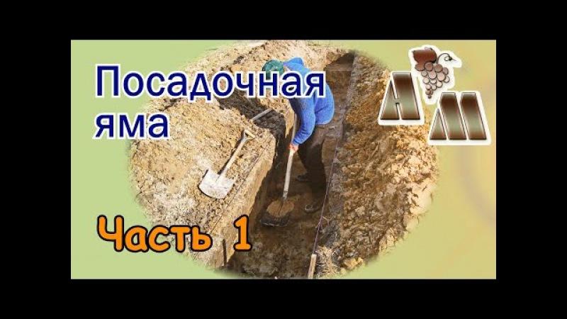 🍇 Посадочная яма для винограда (часть 1). Размеры, организация полива и подкормок