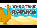 ЖИВОТНЫЕ АФРИКИ! Учим животных для детей! Развивающие мультфильмы для самых мал ...