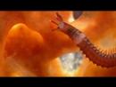 06 BBC Голубая планета Коралловые моря